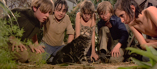 This is one poor little kitty who should make a run for it!  The Sailor Who Fell From Grace With The Sea Lewis John Carlino, 1976 Cinematography | Douglas Slocombe