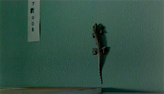 A lizard slithers up the wall behind Kenji's library... Last Life in the Universe Pen-Ek Ratanaruang, 2003 Cinematography | Christopher Doyle